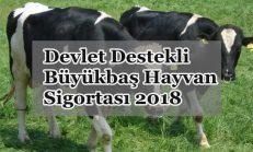Devlet Destekli Büyükbaş Hayvan Sigortası 2018