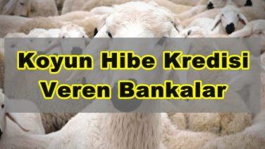 Koyun Hibe Kredisi Veren Bankalar Hangileridir